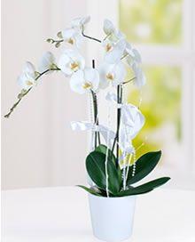 Dinar Çiçekçi